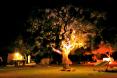 cork tree at night