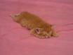 flat bed cat